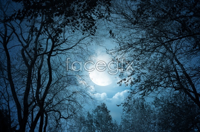 Night moon picture