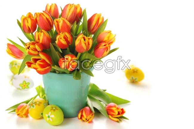 Shuzhuang tulips desktop picture