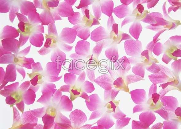 Thousand flower 52