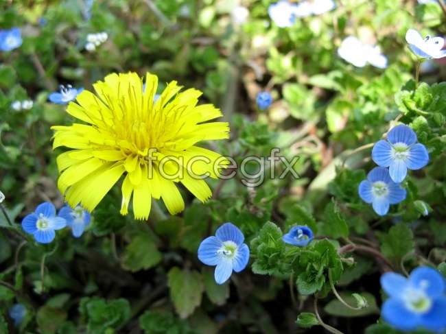 Yellow natural flowers HD pictures