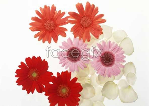 Flowers close-up 1028