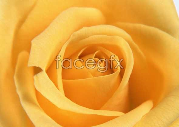 Flowers close-up 161