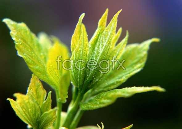 Flowers close-up 352