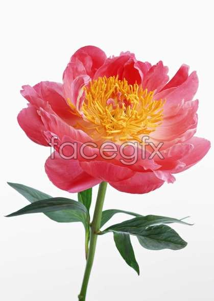 Flowers close-up 573