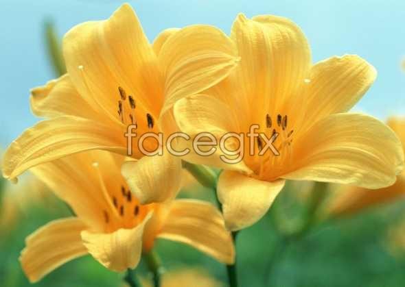 Flowers close-up 615
