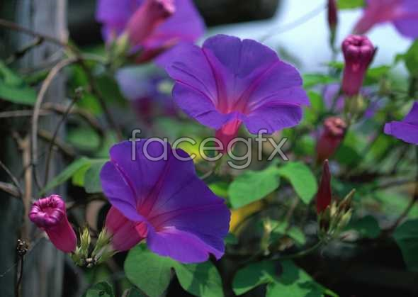 Flowers close-up 738