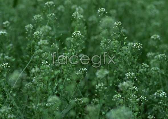 Flowers close-up 746