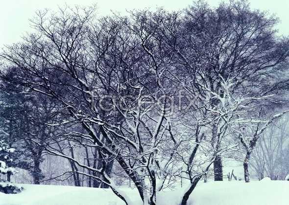 Frozen 365