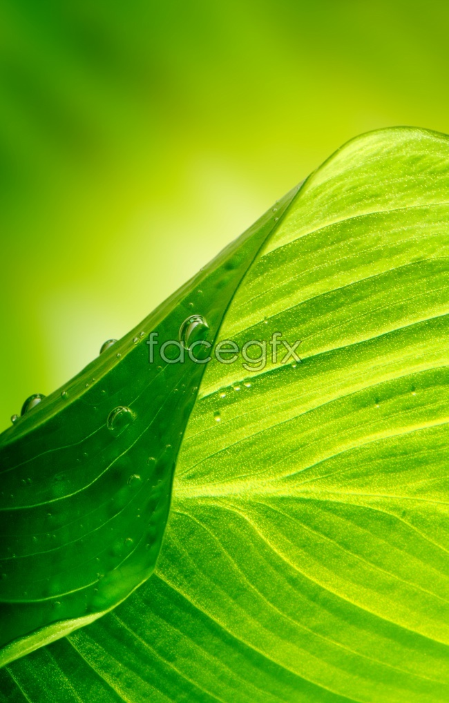 Green leaf texture HD backgrounds pictures