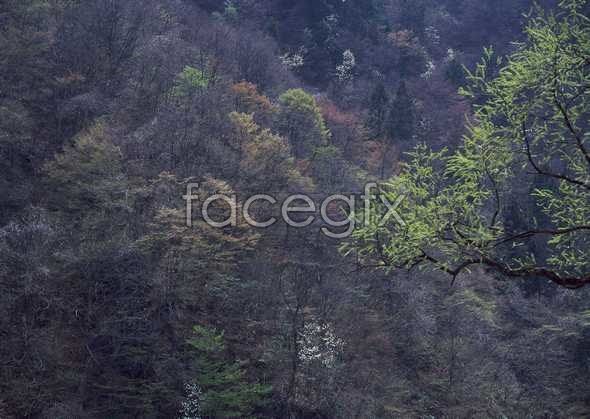 Jungle beauty of 498