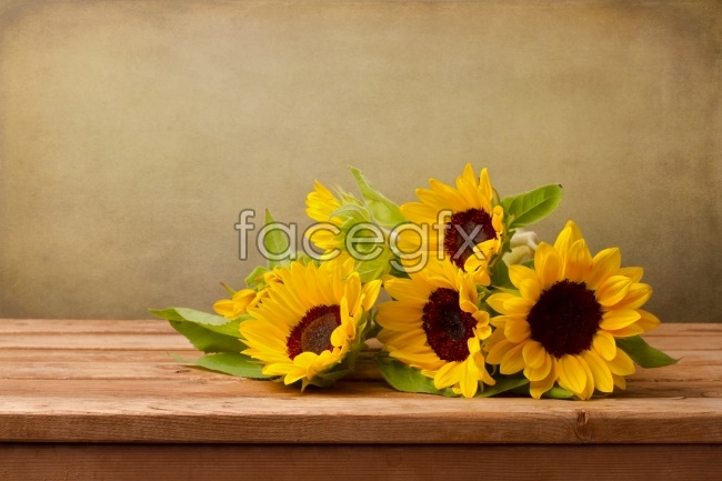 Sunflower high definition pictures