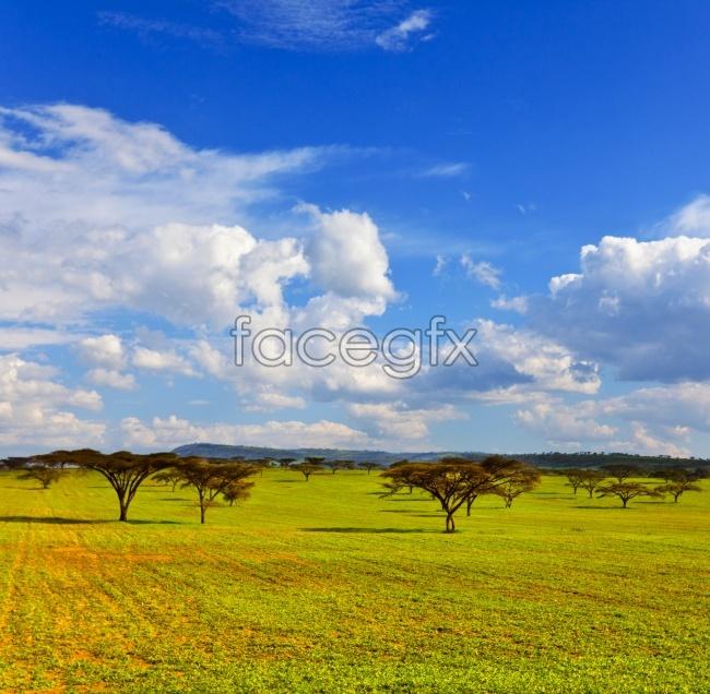 The vast grassland pictures