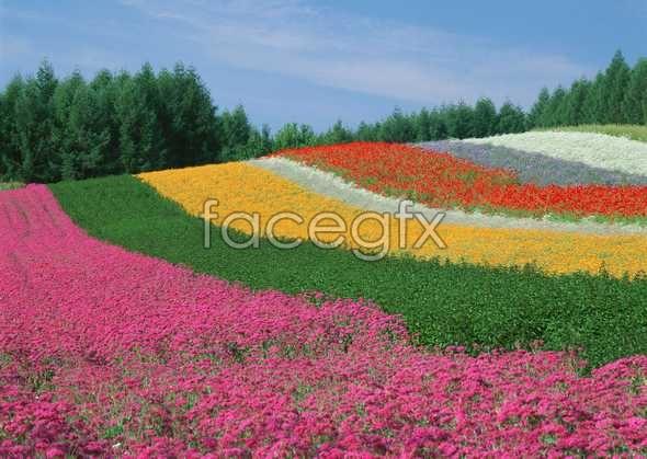 Thousand flower 74