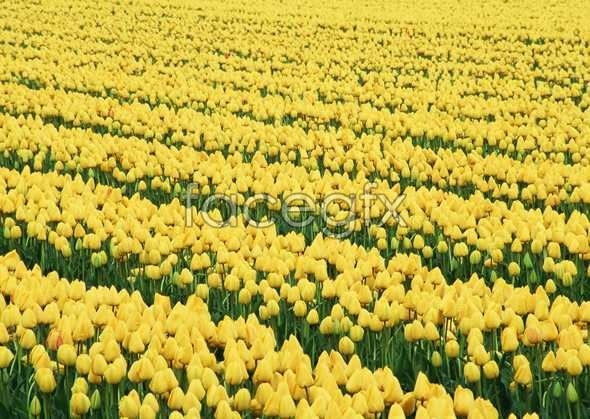 Thousands of flowers 533