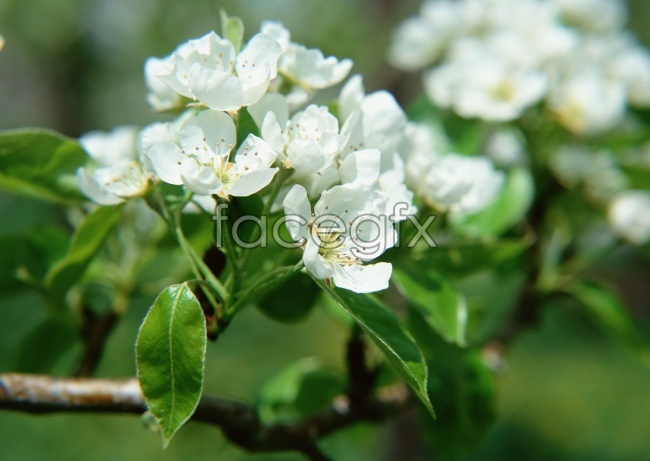 Winter plum blossom picture material