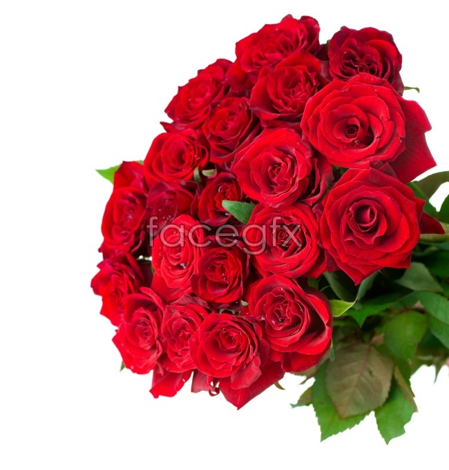 A bouquet of beautiful roses pictures