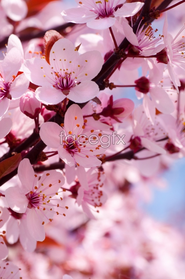 Beautiful pink flower picture