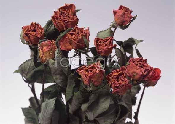 Flowers close-up 1053
