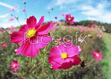 Flowers close-up 2,078