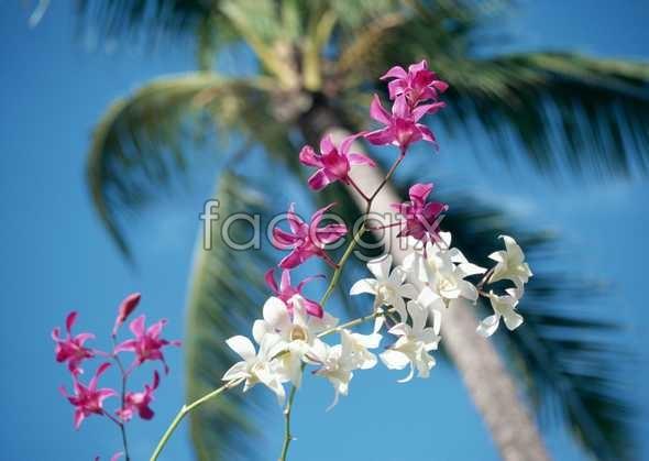 Flowers close-up 2022