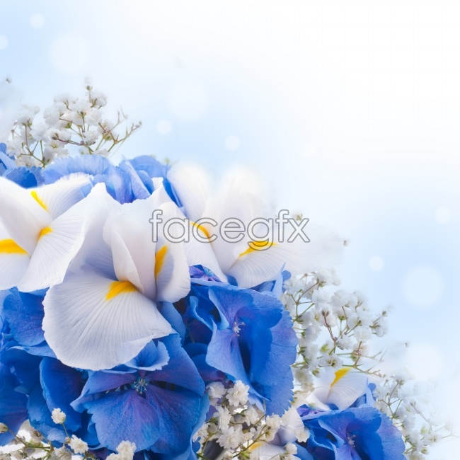 Blue beautiful flowers HD pictures