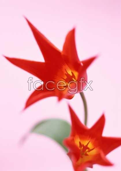 Flowers close-up 1707