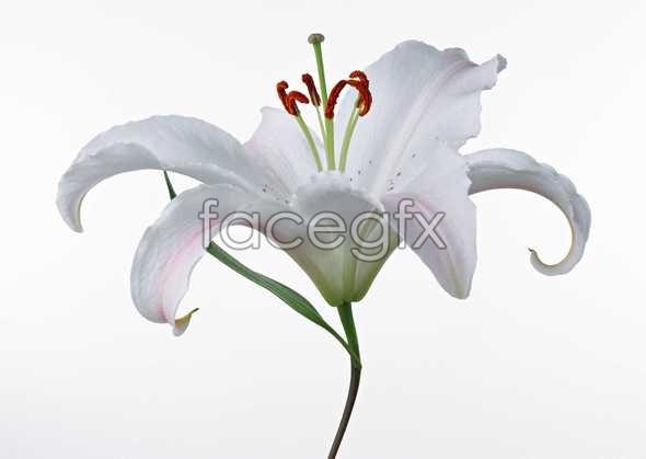 Flowers close-up 460