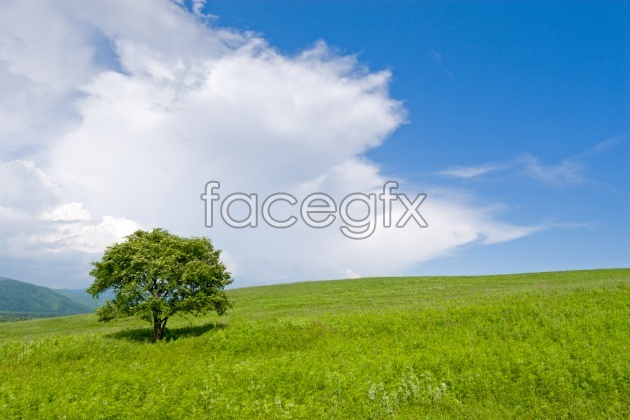 HD green meadows pictures