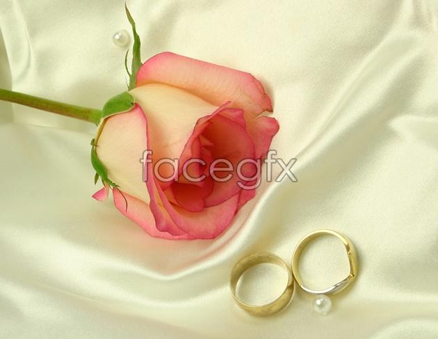 HD rose pho