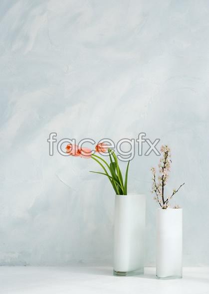 Indoor flower 78