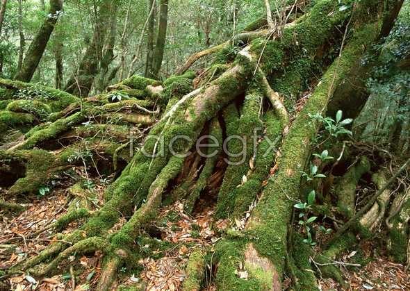Jungle beauty of 367