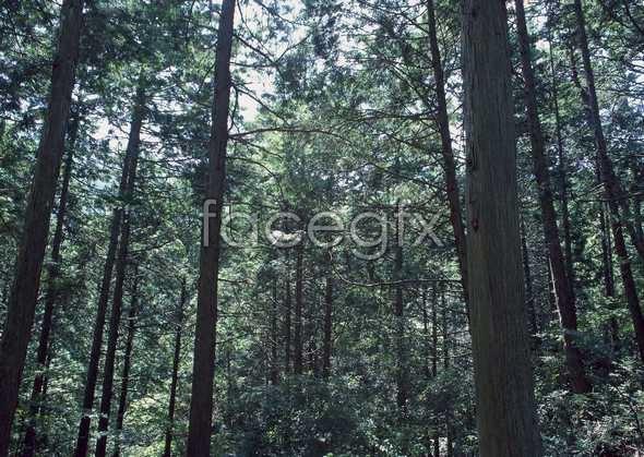 Jungle beauty of 540