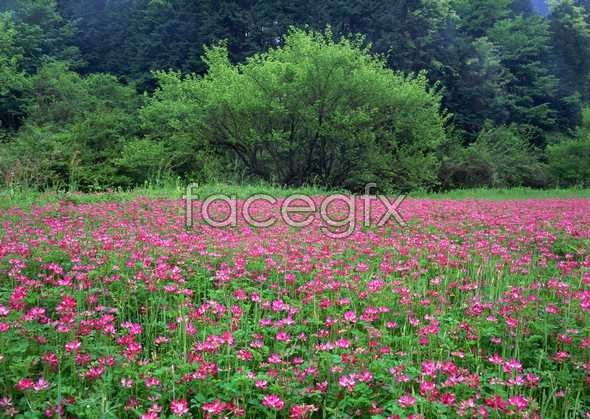 Thousands of flowers 557