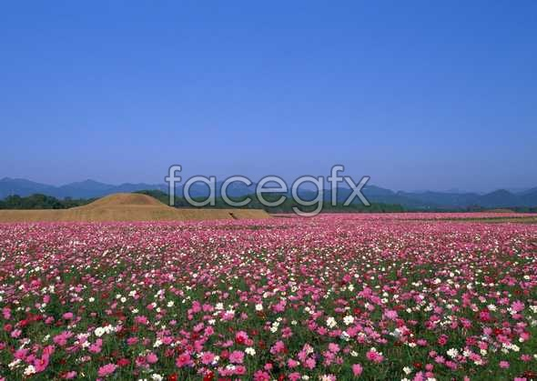 Thousands of flowers and 722