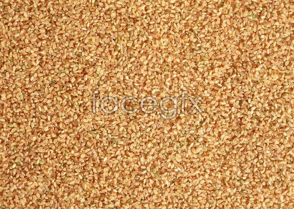 Crops 138
