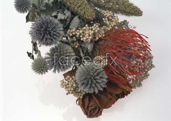 Flowers close-up 1066