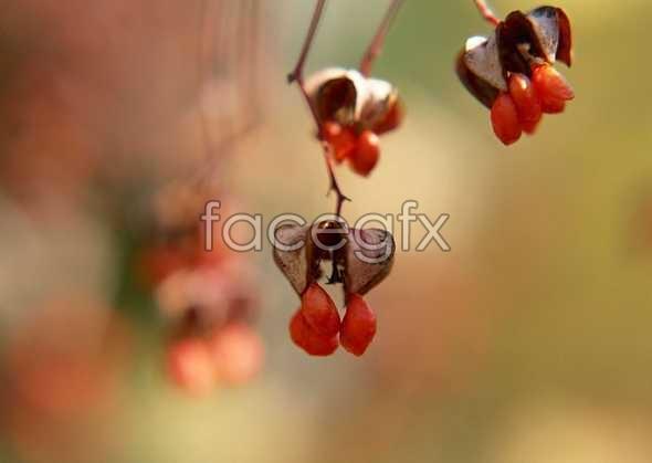 Flowers close-up 1166