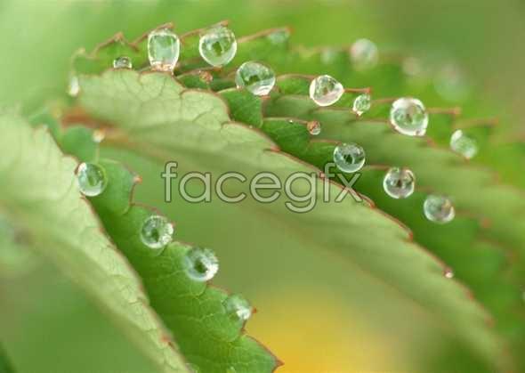 Flowers close-up 646