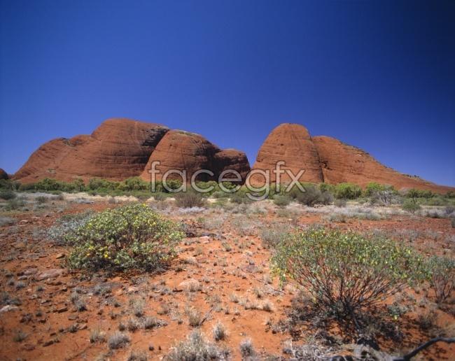 HD landscape desert plants pictures