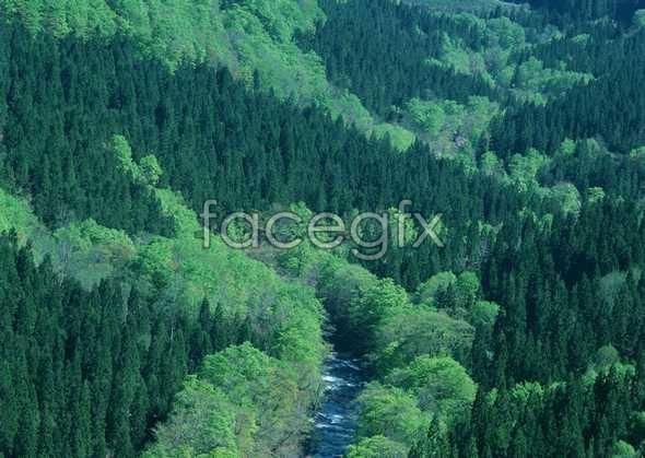 Jungle beauty of 189