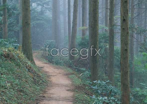 Jungle beauty of 230
