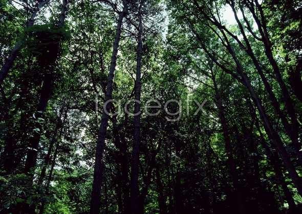 Jungle beauty of 538