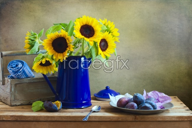 Potted sunflower picture