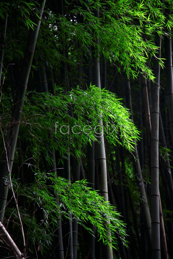 Bamboo scenery picture material