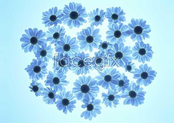 Flowers close-up 1043