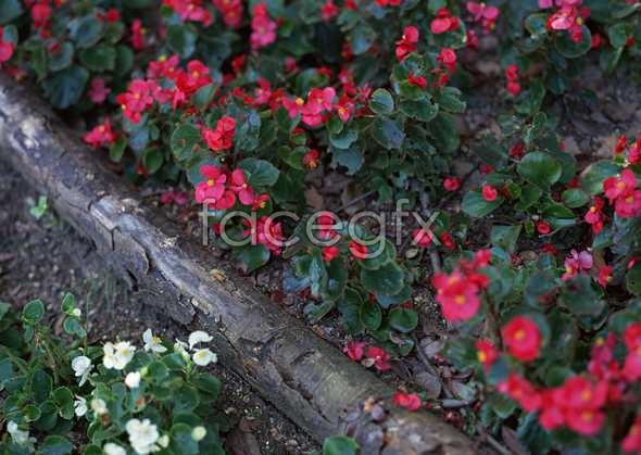 Flowers close-up 1219