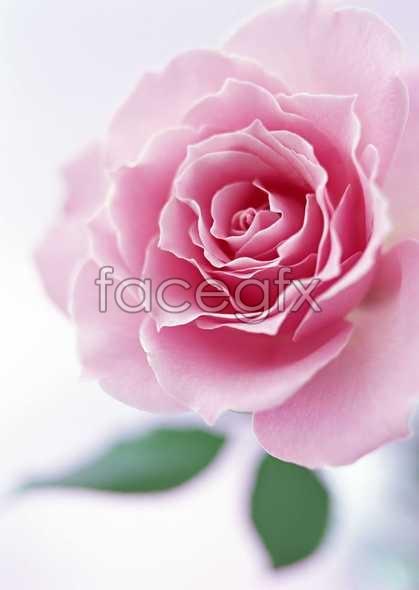 Flowers close-up 1437