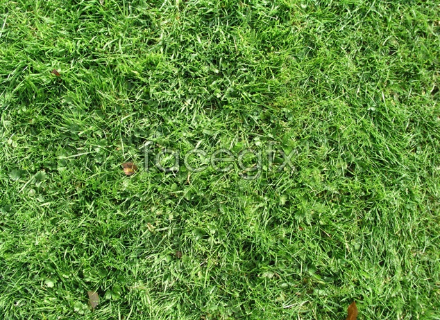 Green grass material picture