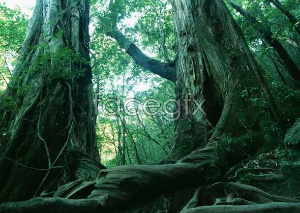 Jungle beauty of 184