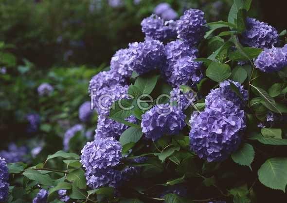 Flowers close-up 1079